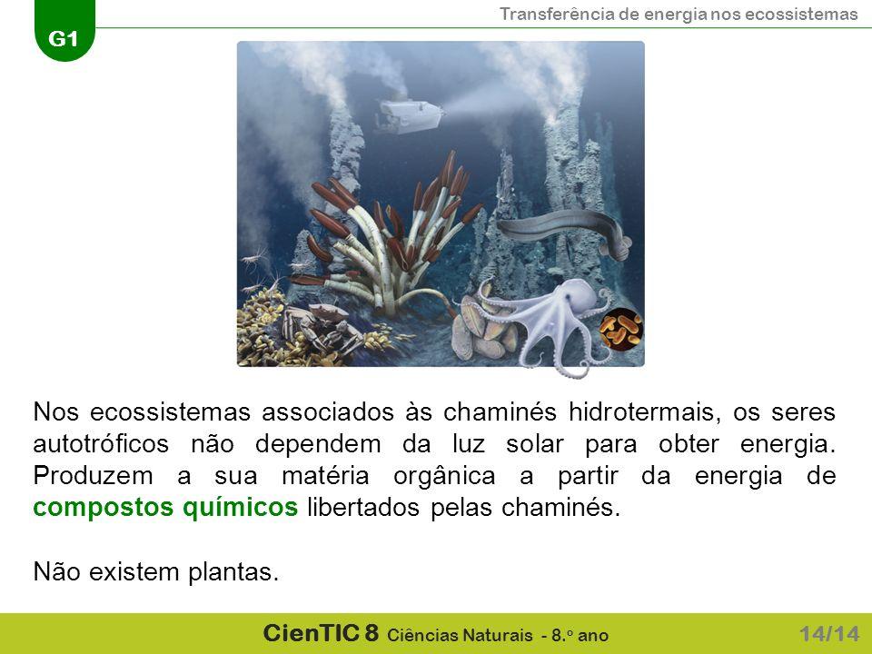 Nos ecossistemas associados às chaminés hidrotermais, os seres autotróficos não dependem da luz solar para obter energia. Produzem a sua matéria orgânica a partir da energia de compostos químicos libertados pelas chaminés.