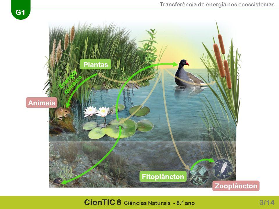 Plantas Energia química Animais Fitoplâncton Zooplâncton 3/14