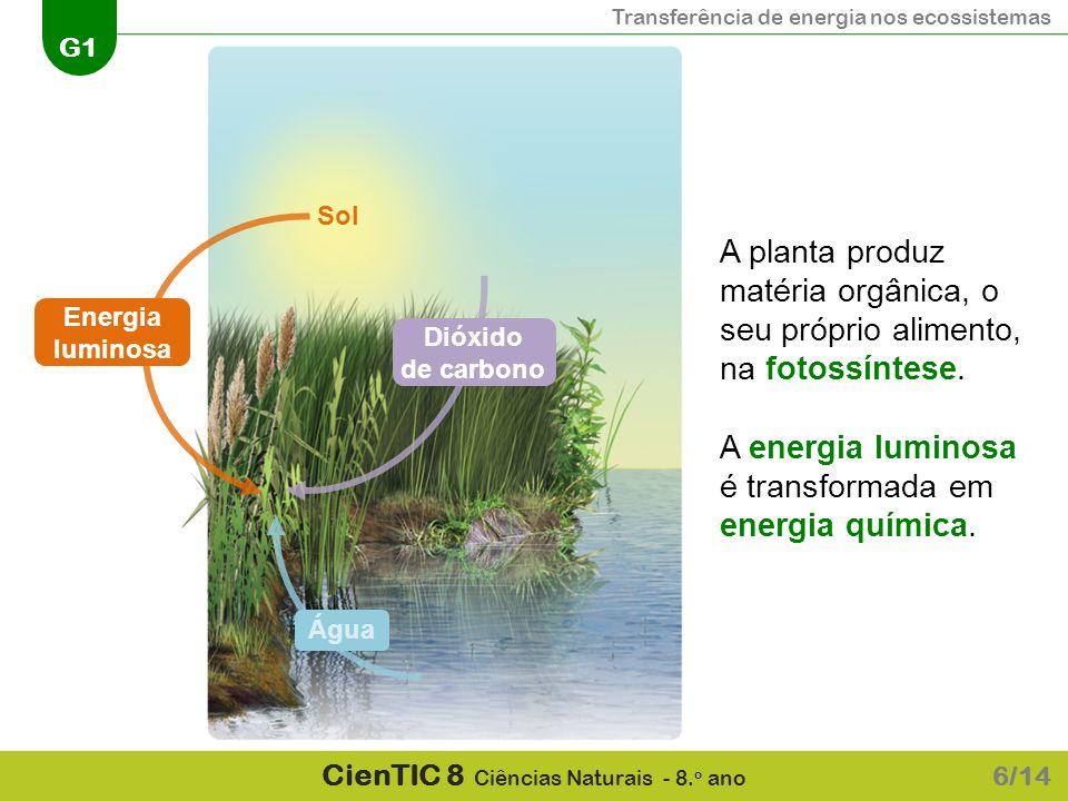 A energia luminosa é transformada em energia química.