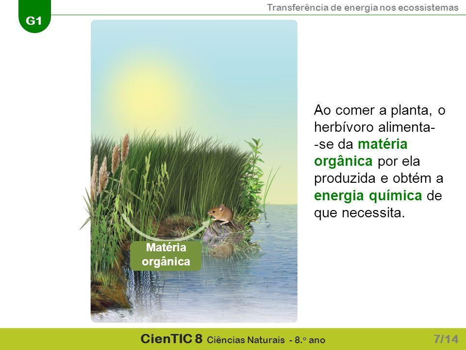 Ao comer a planta, o herbívoro alimenta-