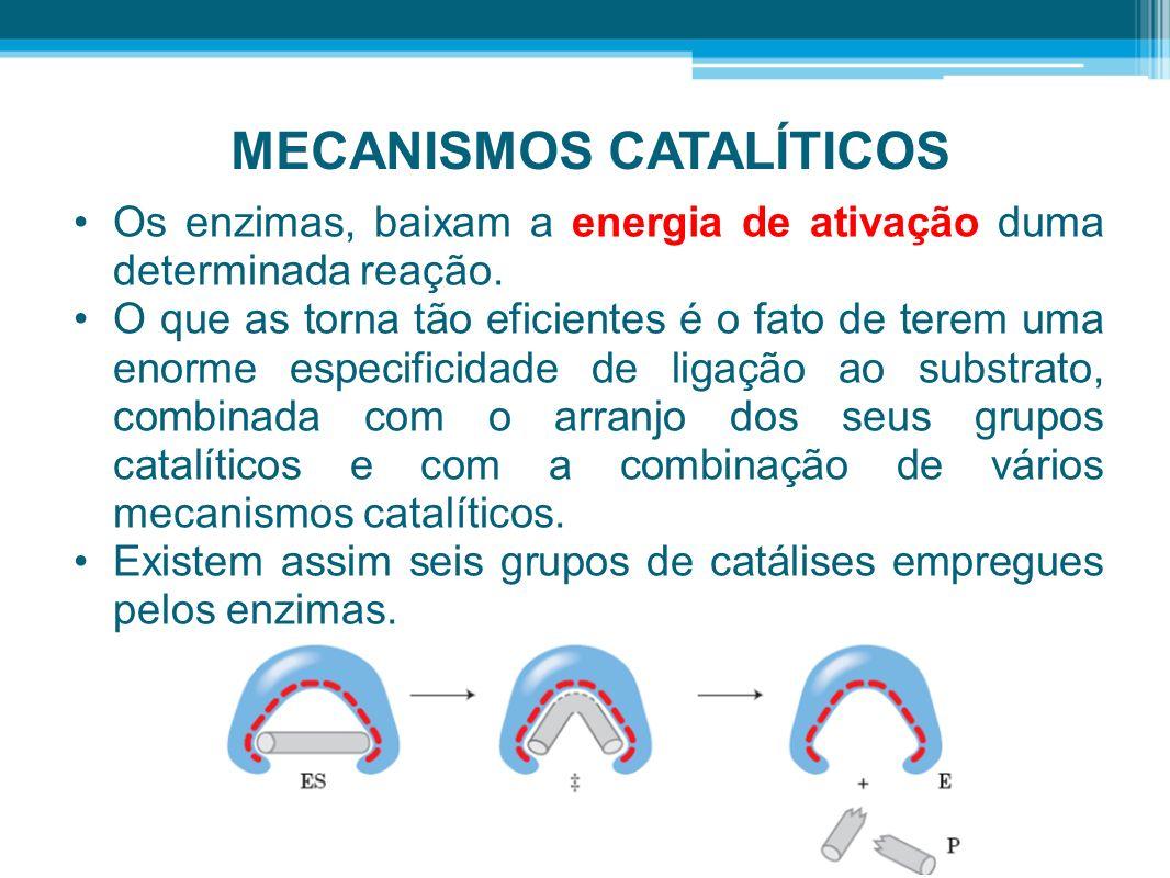 MECANISMOS CATALÍTICOS