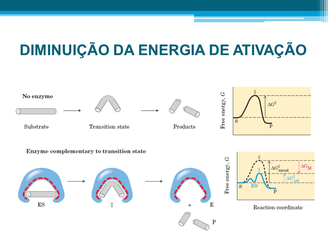 DIMINUIÇÃO DA ENERGIA DE ATIVAÇÃO