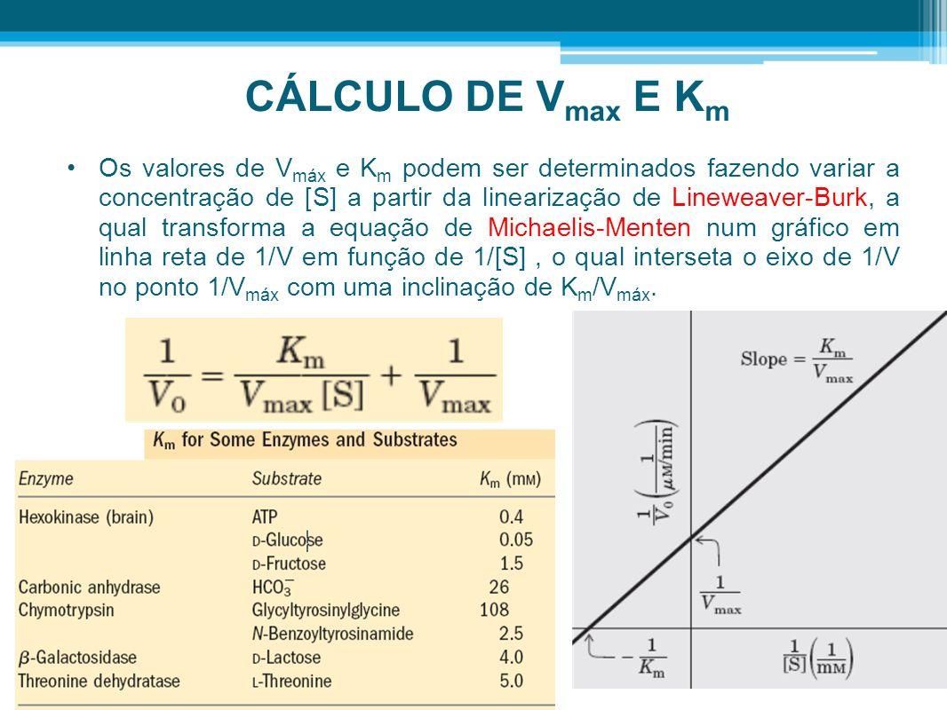 CÁLCULO DE Vmax E Km
