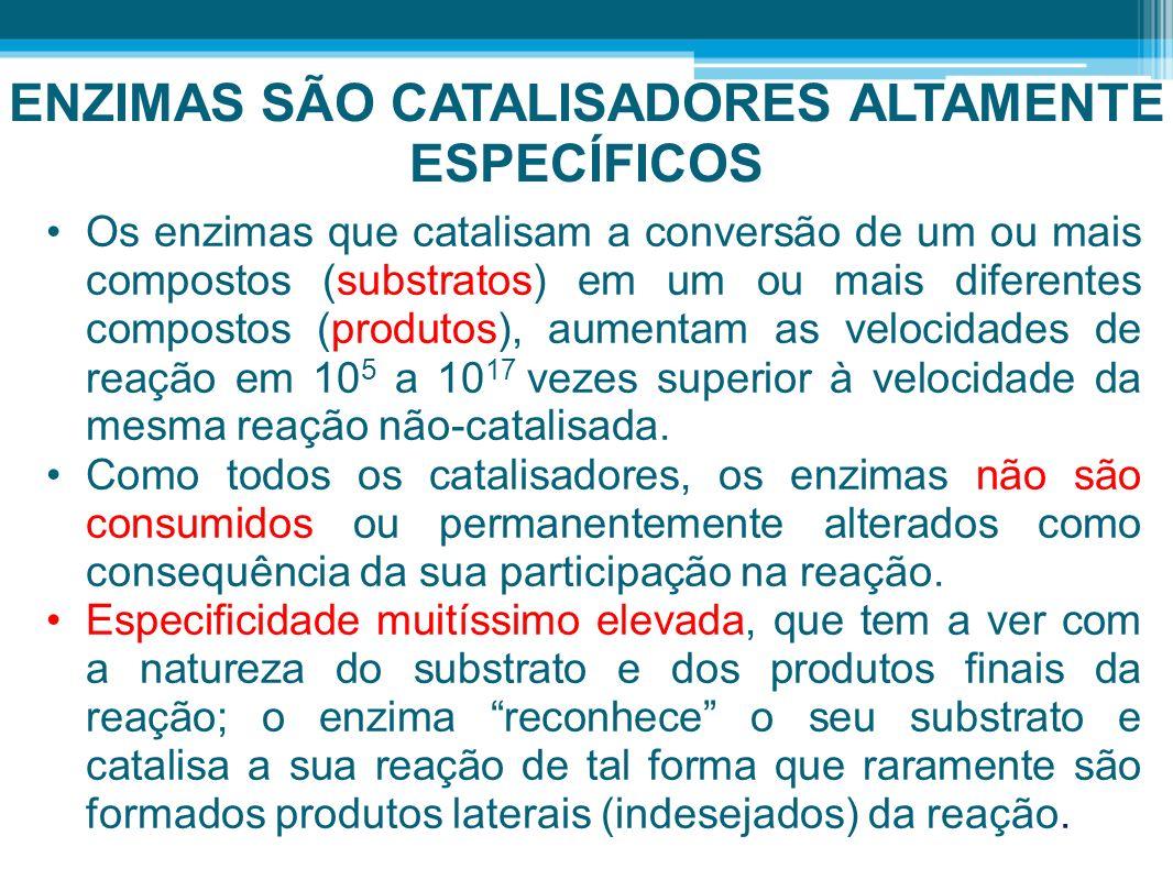 ENZIMAS SÃO CATALISADORES ALTAMENTE ESPECÍFICOS