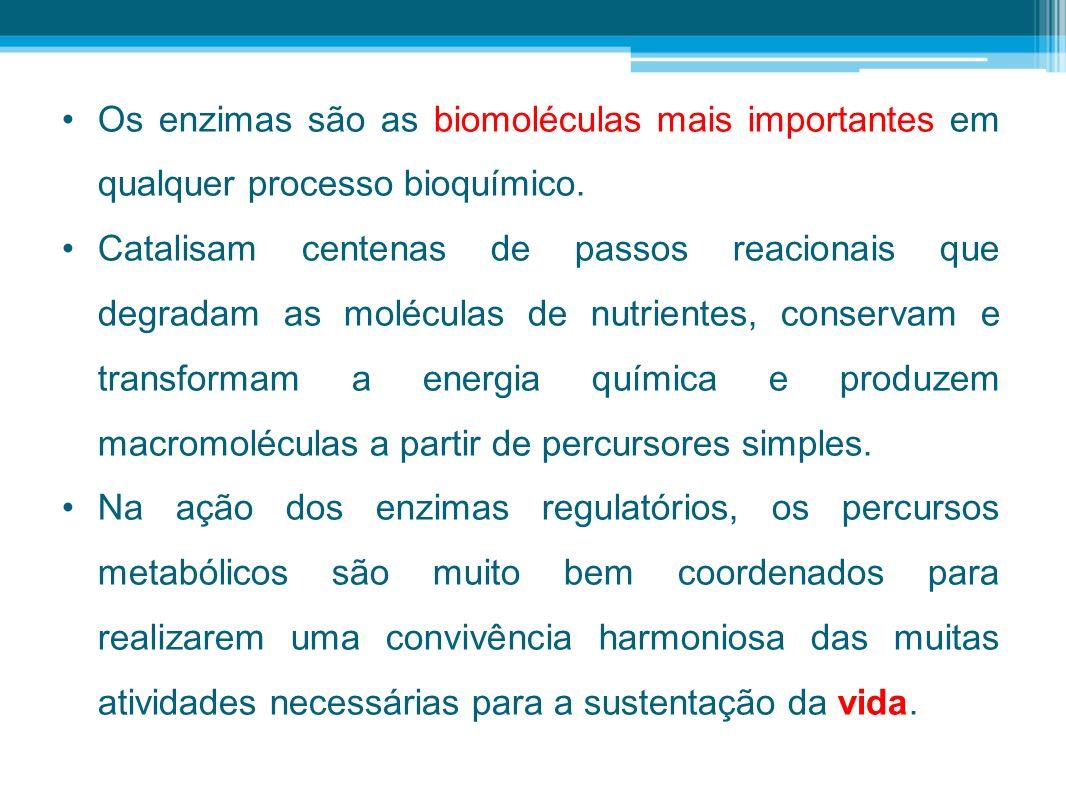 Os enzimas são as biomoléculas mais importantes em qualquer processo bioquímico.