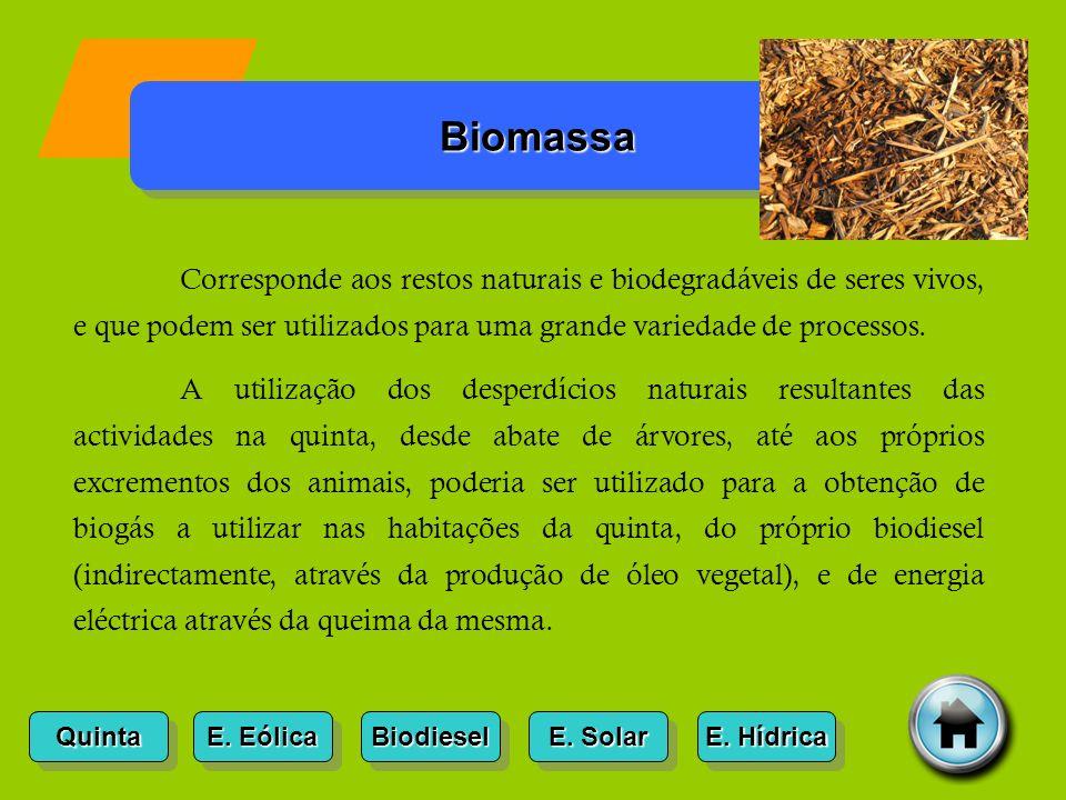 Biomassa Corresponde aos restos naturais e biodegradáveis de seres vivos, e que podem ser utilizados para uma grande variedade de processos.