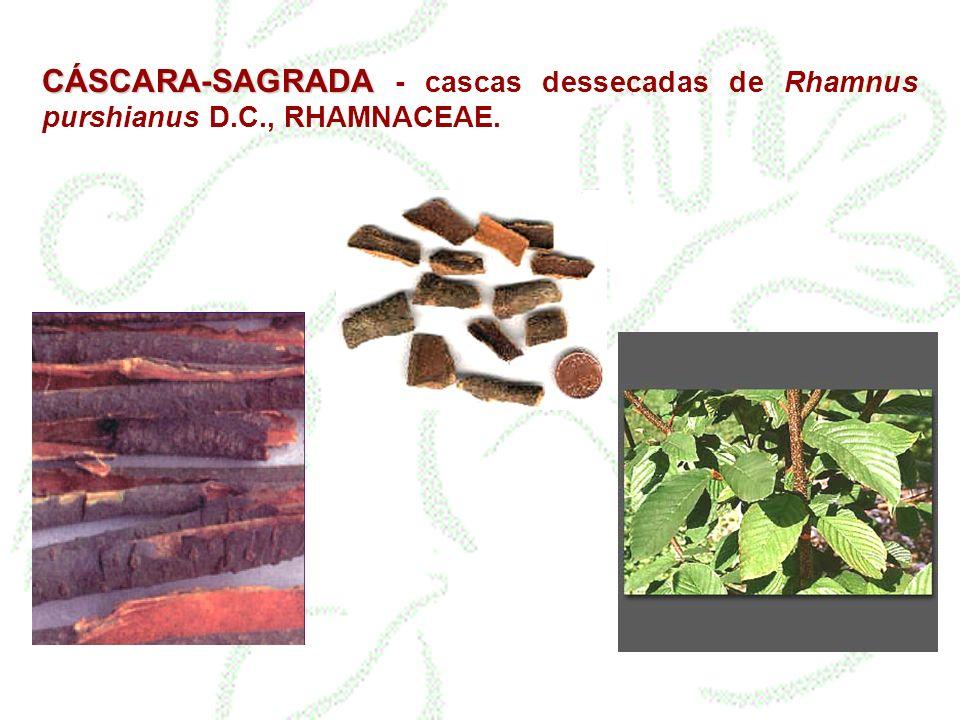 CÁSCARA-SAGRADA - cascas dessecadas de Rhamnus purshianus D. C