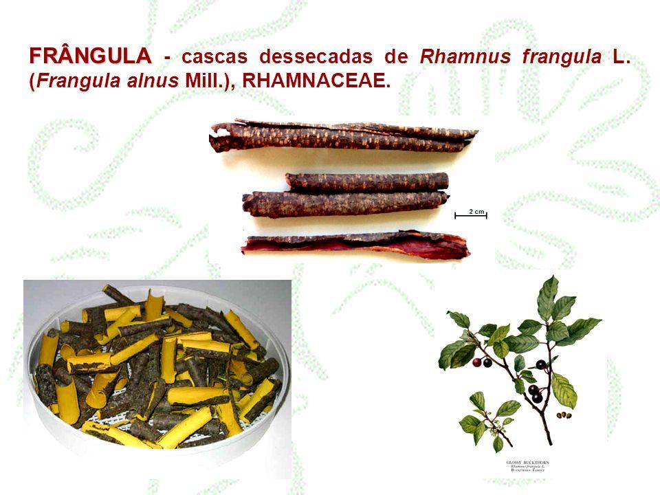 FRÂNGULA - cascas dessecadas de Rhamnus frangula L