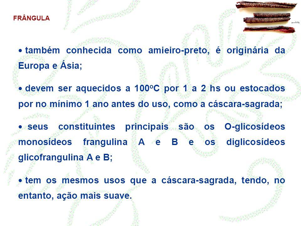 também conhecida como amieiro-preto, é originária da Europa e Ásia;