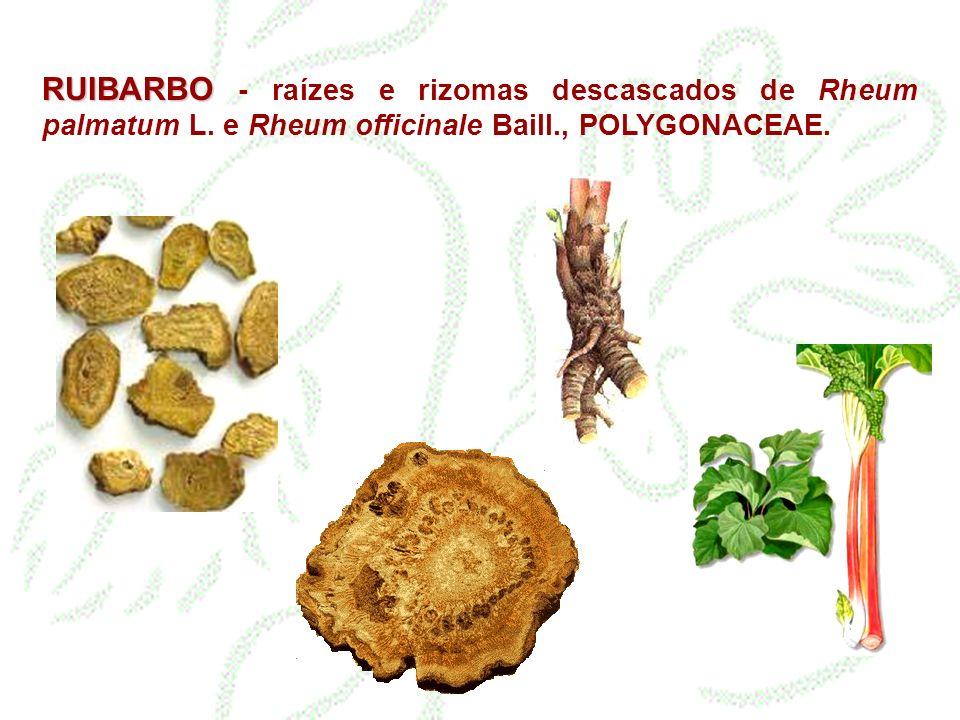 RUIBARBO - raízes e rizomas descascados de Rheum palmatum L