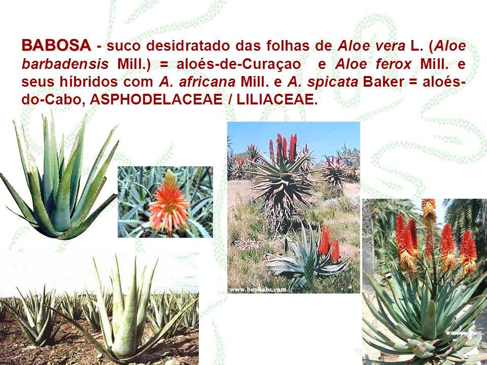 BABOSA - suco desidratado das folhas de Aloe vera L