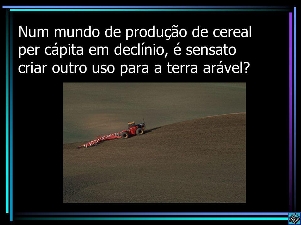 Num mundo de produção de cereal per cápita em declínio, é sensato criar outro uso para a terra arável