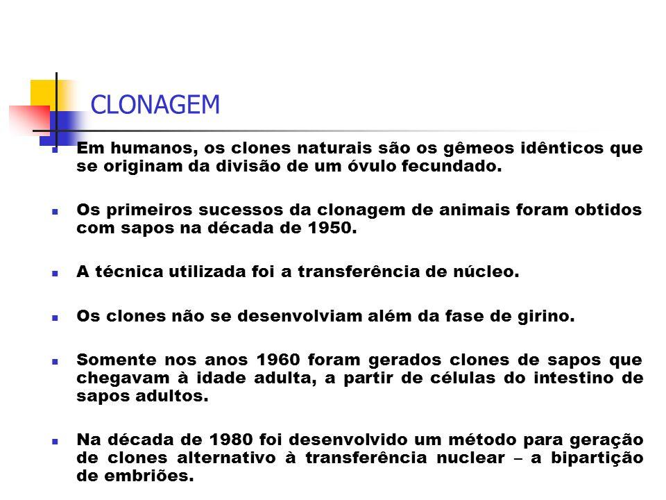 CLONAGEM Em humanos, os clones naturais são os gêmeos idênticos que se originam da divisão de um óvulo fecundado.
