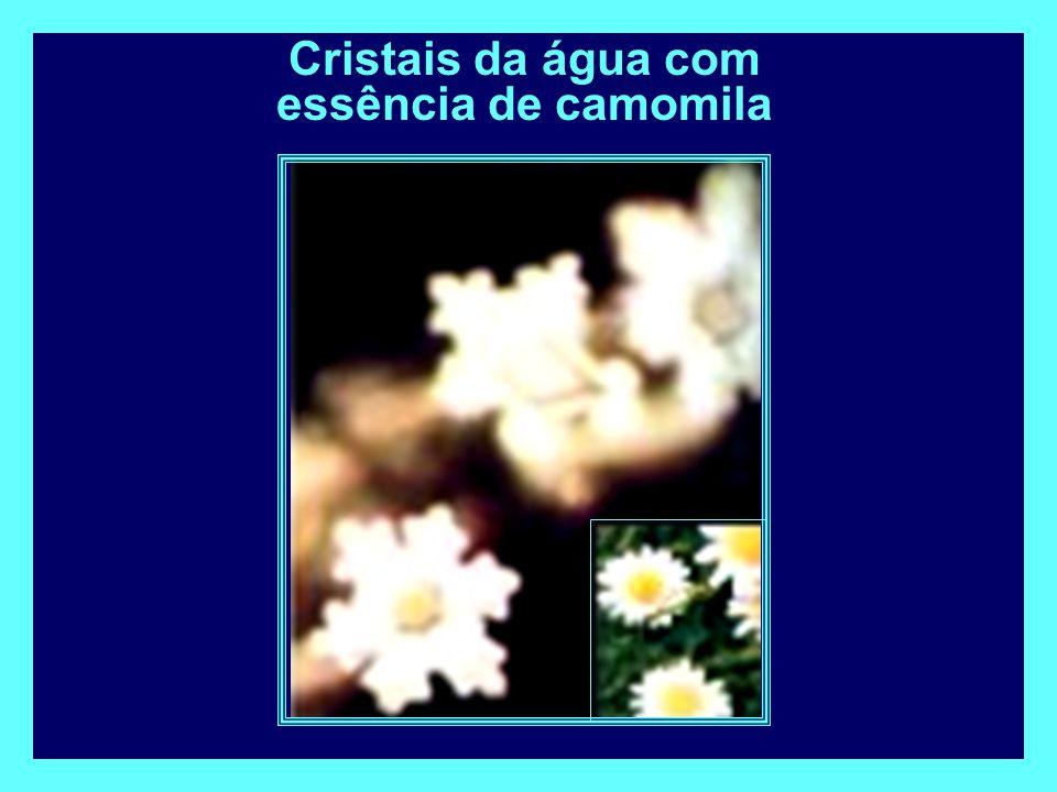Cristais da água com essência de camomila