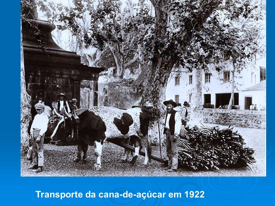 Transporte da cana-de-açúcar em 1922