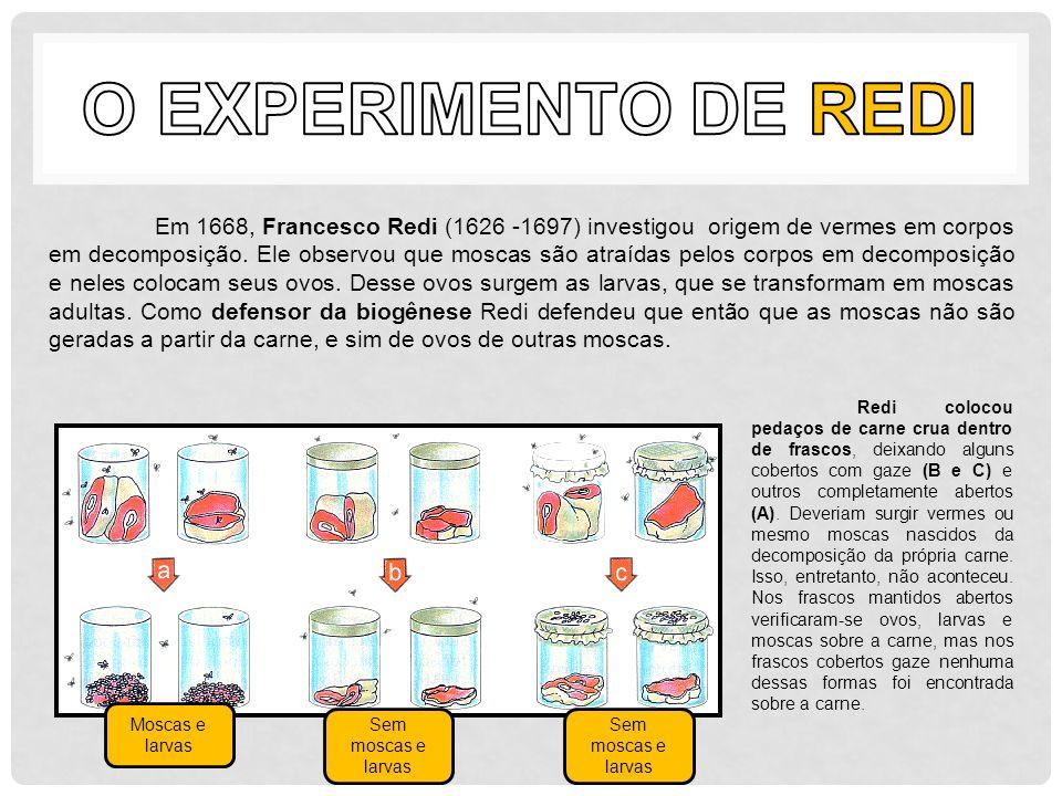 O Experimento de Redi