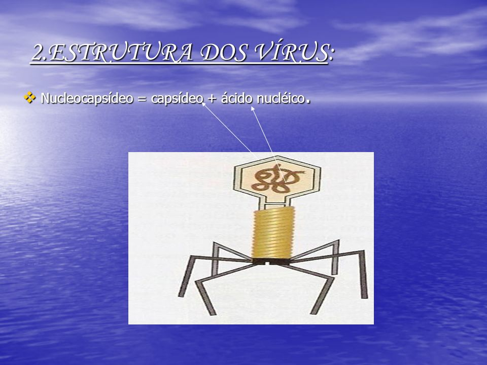 2.ESTRUTURA DOS VÍRUS: Nucleocapsídeo = capsídeo + ácido nucléico.