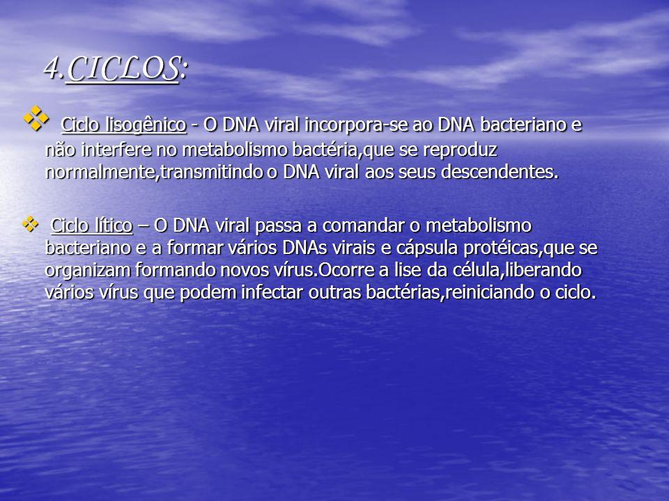 4.CICLOS: