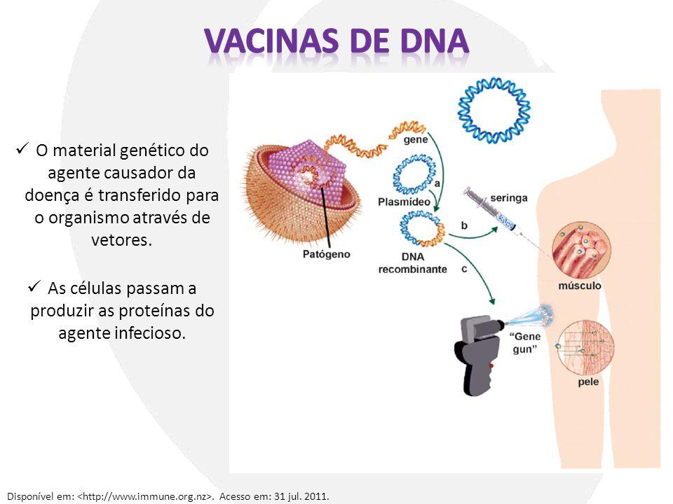As células passam a produzir as proteínas do agente infecioso.
