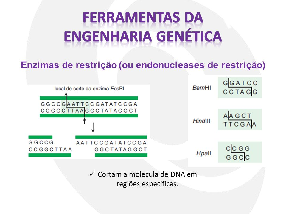 Ferramentas da Engenharia genética