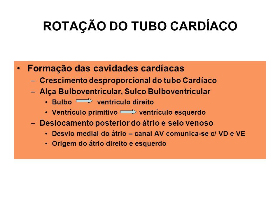 ROTAÇÃO DO TUBO CARDÍACO