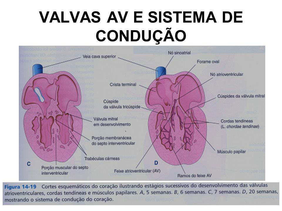 VALVAS AV E SISTEMA DE CONDUÇÃO