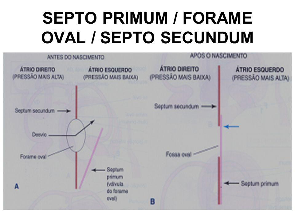 SEPTO PRIMUM / FORAME OVAL / SEPTO SECUNDUM