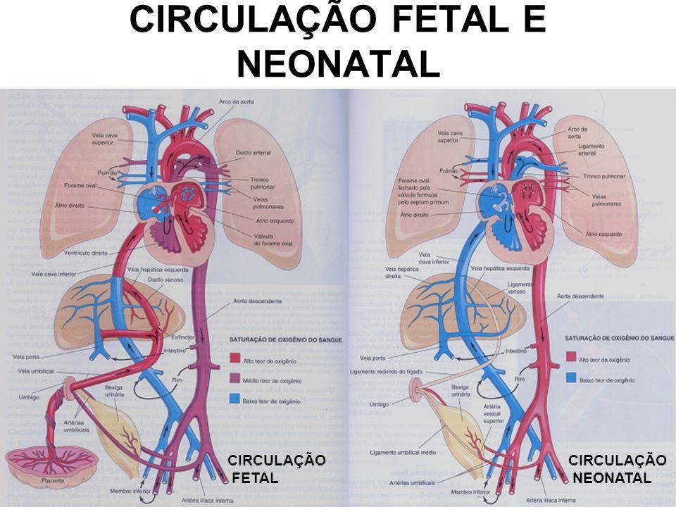 CIRCULAÇÃO FETAL E NEONATAL