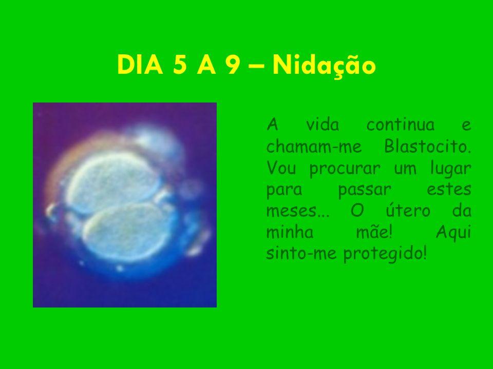 DIA 5 A 9 – Nidação