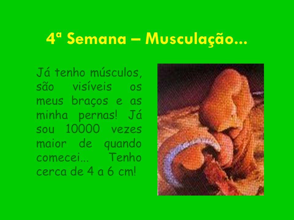 4ª Semana – Musculação...
