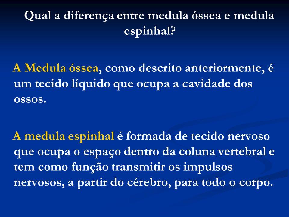 Qual a diferença entre medula óssea e medula espinhal
