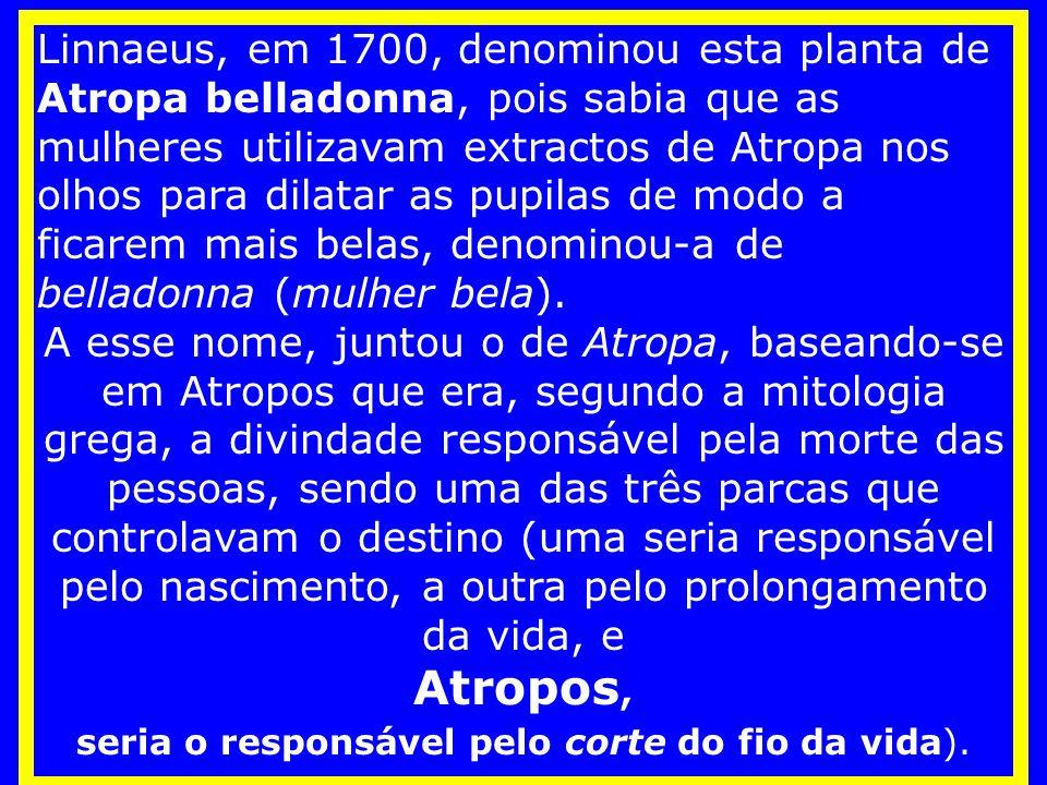 Linnaeus, em 1700, denominou esta planta de Atropa belladonna, pois sabia que as mulheres utilizavam extractos de Atropa nos olhos para dilatar as pupilas de modo a ficarem mais belas, denominou-a de belladonna (mulher bela).