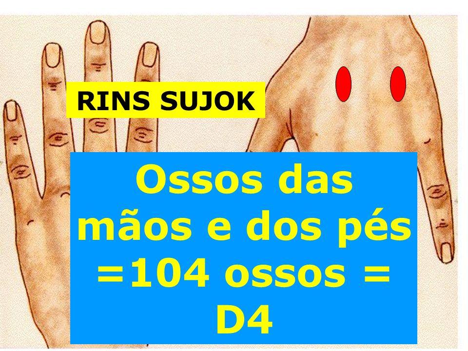 Ossos das mãos e dos pés =104 ossos = D4