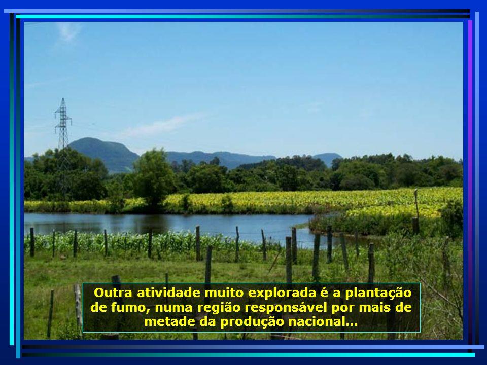 P0010391 - S. J. POLÊSINE - PLANTAÇÃO DE FUMO-650