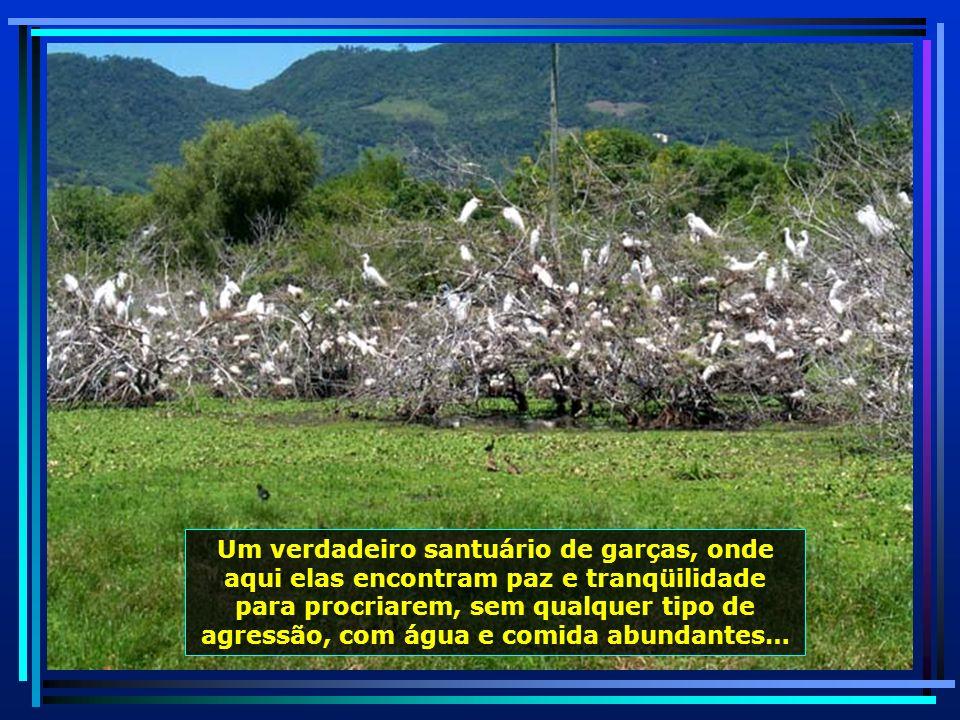 P0010367 - S. J. POLÊSINE - SANTUÁRIO DE GARÇAS-650