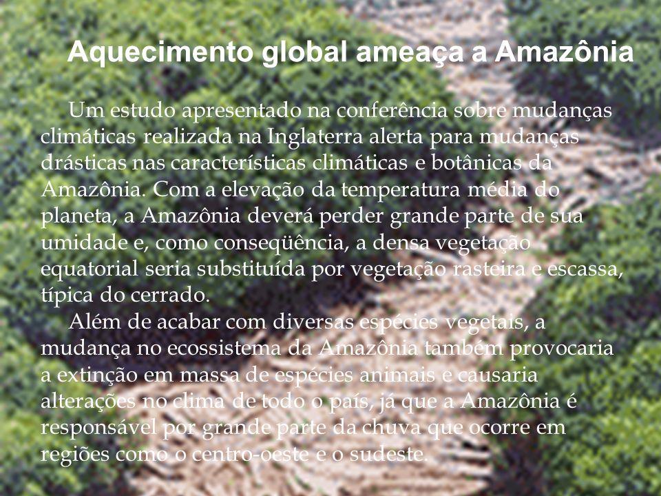 Aquecimento global ameaça a Amazônia
