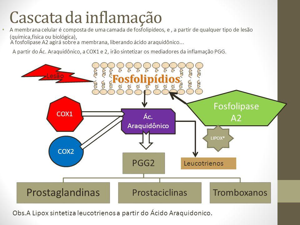 Cascata da inflamação Fosfolipídios Prostaglandinas Fosfolipase A2