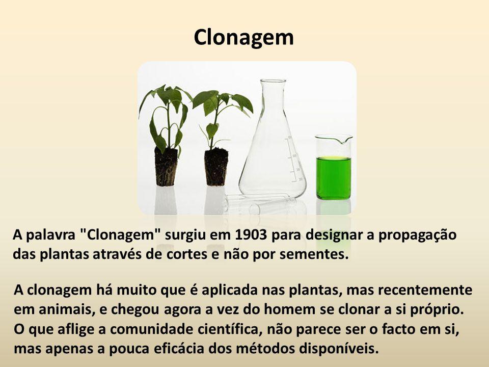 Clonagem A palavra Clonagem surgiu em 1903 para designar a propagação das plantas através de cortes e não por sementes.