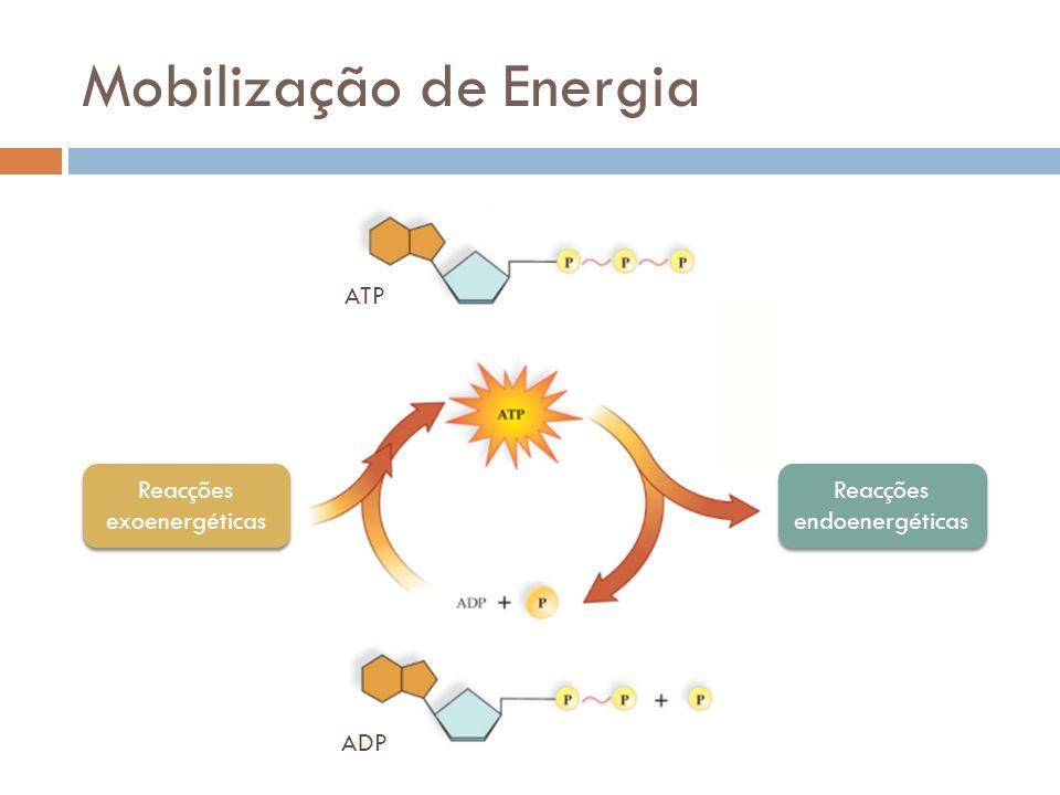 Mobilização de Energia