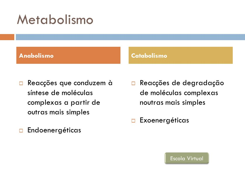 Metabolismo Anabolismo. Catabolismo. Reacções que conduzem à síntese de moléculas complexas a partir de outras mais simples.