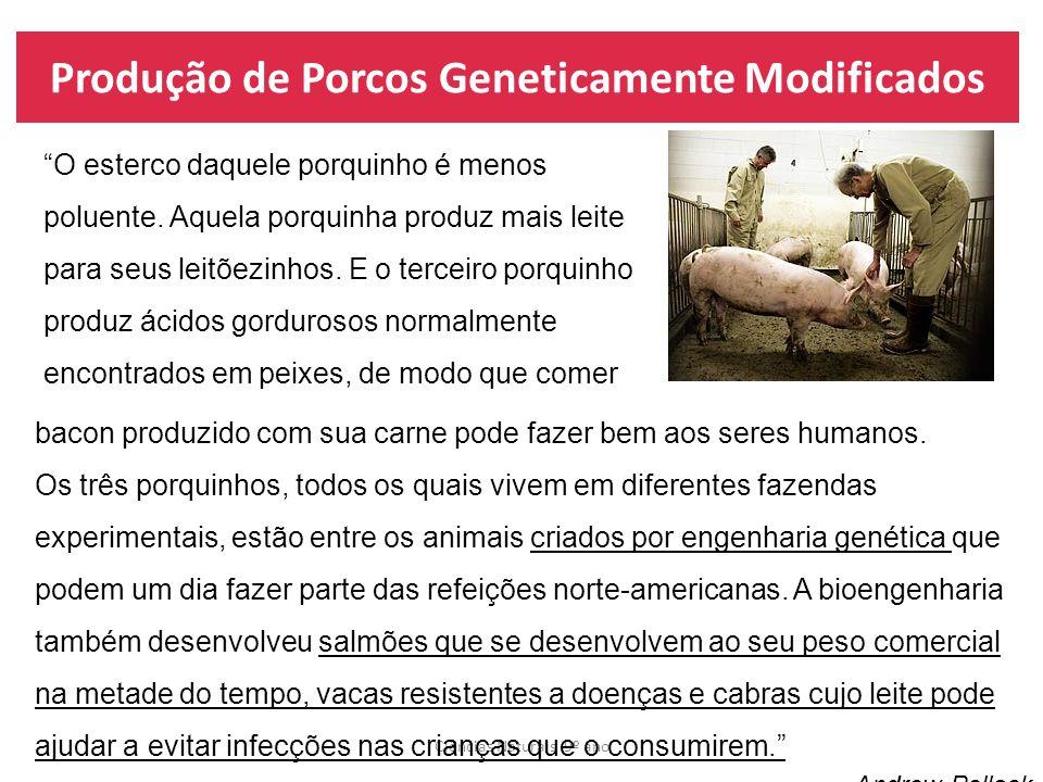 Produção de Porcos Geneticamente Modificados