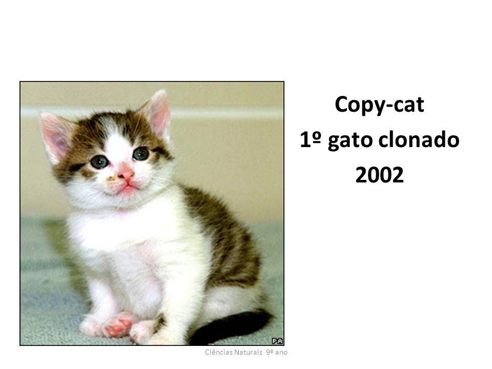 Copy-cat 1º gato clonado 2002