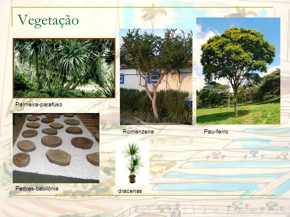 Vegetação Palmeira-parafuso Romanzeira Pau-ferro Pedras-babilônia
