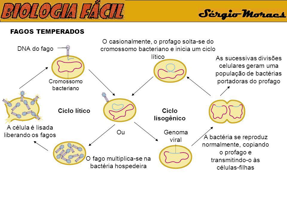 Ciclo lítico Ciclo lisogênico