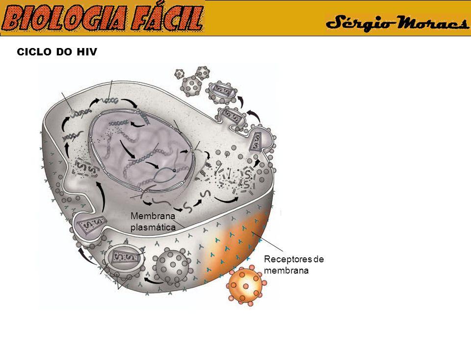 CICLO DO HIV Membrana plasmática Receptores de membrana