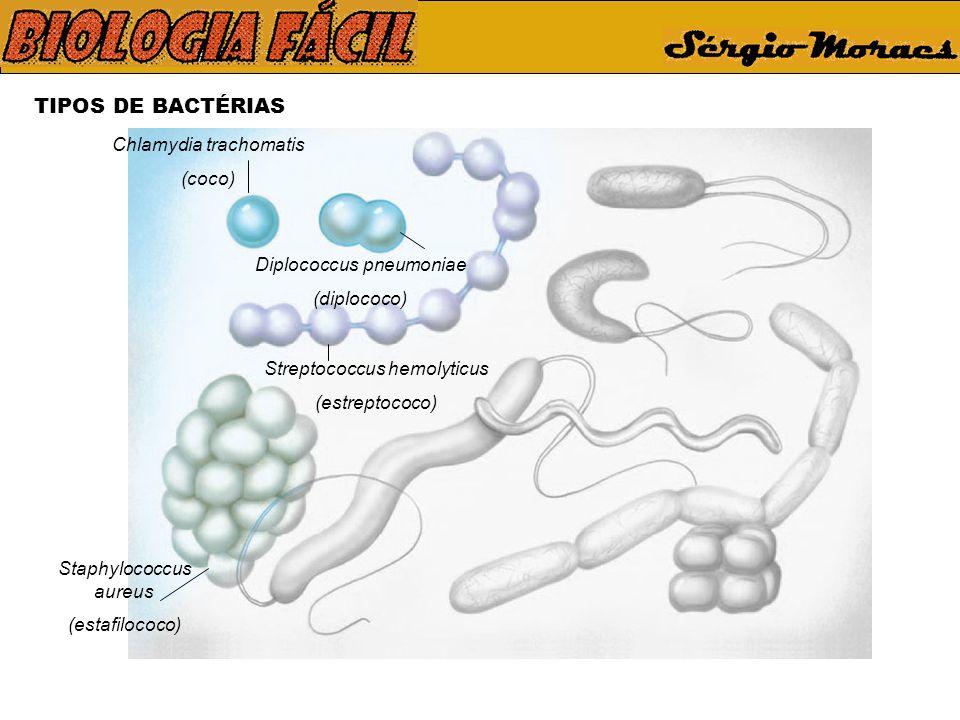 TIPOS DE BACTÉRIAS Chlamydia trachomatis (coco) Diplococcus pneumoniae