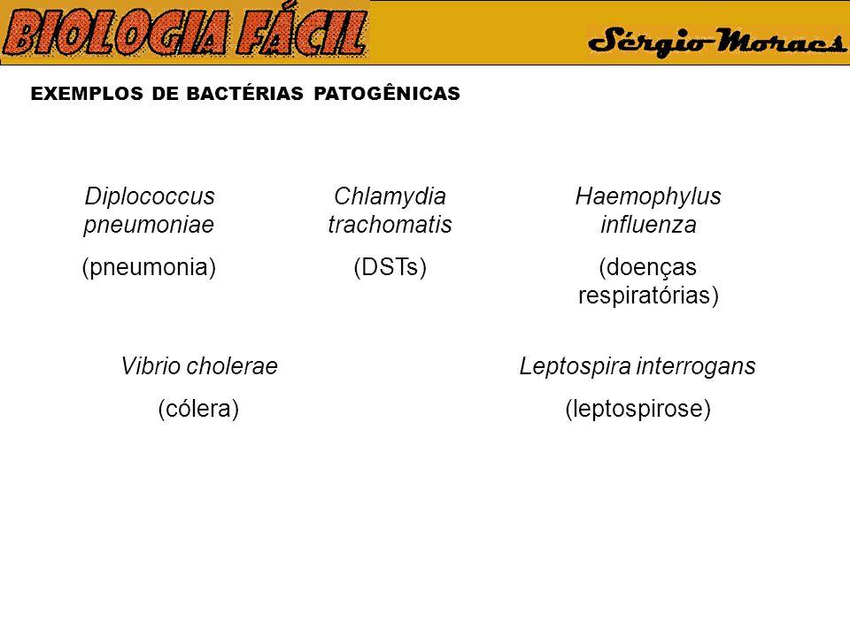 Diplococcus pneumoniae (pneumonia) Chlamydia trachomatis (DSTs)