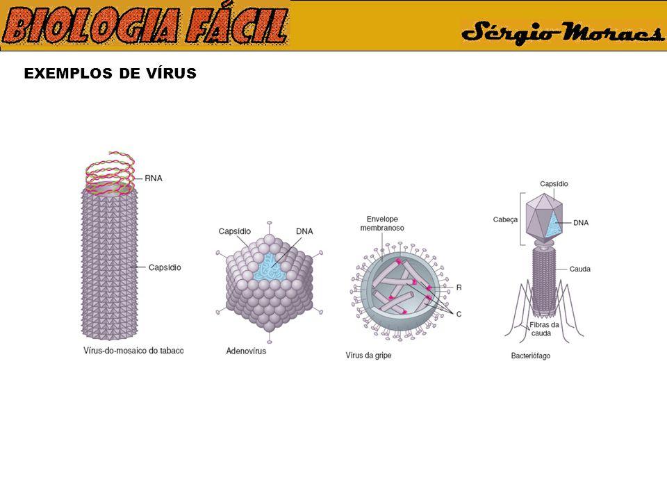 EXEMPLOS DE VÍRUS