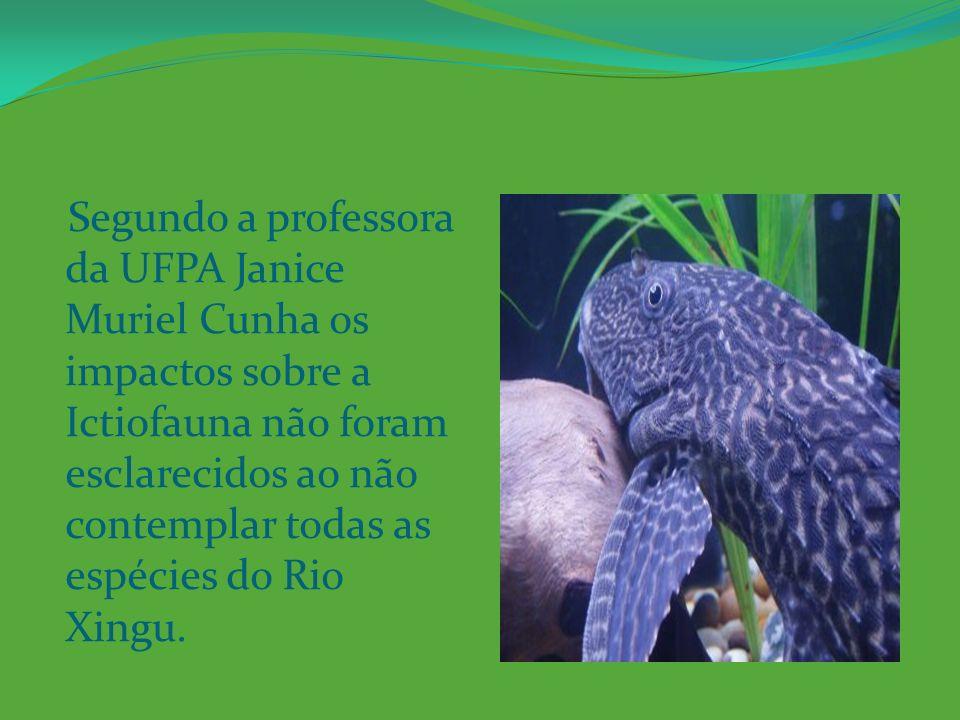 Segundo a professora da UFPA Janice Muriel Cunha os impactos sobre a Ictiofauna não foram esclarecidos ao não contemplar todas as espécies do Rio Xingu.