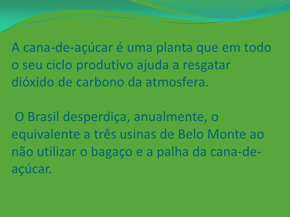 A cana-de-açúcar é uma planta que em todo o seu ciclo produtivo ajuda a resgatar dióxido de carbono da atmosfera.